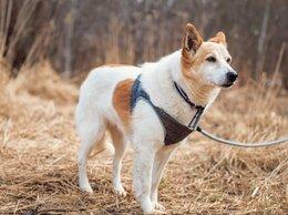 Собаки - Миниатюрная собачка ищет дом, срочно, 0
