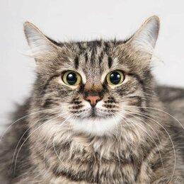Кошки - Кошка-сирота Раечка в добрые руки , 0