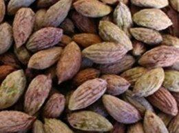 Семена - Семена Оливы Крымской 10 шт., 0