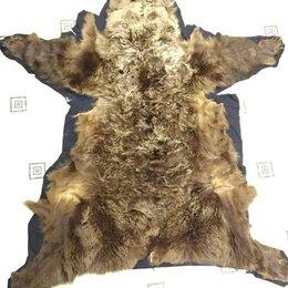 Рога, шкуры, чучела животных - Ковер из шкуры медведя, 0