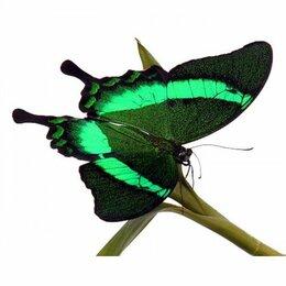 Другие - Живые бабочки, 0