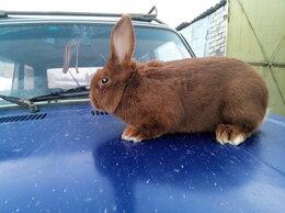 Кролики - кролики мясных пород на племя, 0