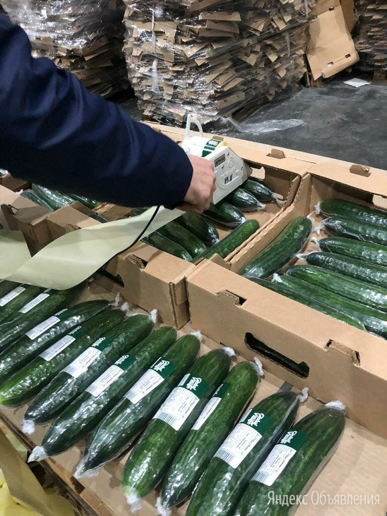 Упаковщик огурцов (вахта в Московской области) - Упаковщики, фото 0