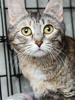 Кошки - Умница, красавица и милашка Тальва, 0