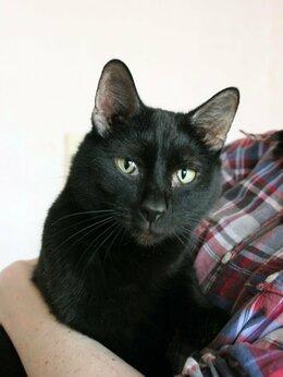 Кошки - Кот Негритенок, 0