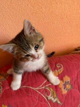 Животные - Котенок Тиграша, 0