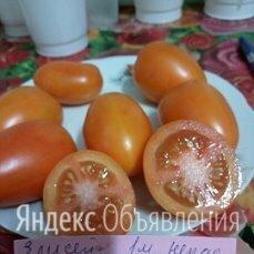 Семена томатов собственного сбора по цене 50₽ - Семена, фото 0