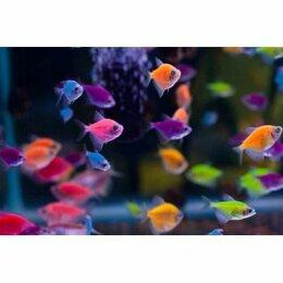 Аквариумные рыбки - аквариумные рыбки оптом, 0