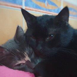 Кошки - Сладкая парочка Твикс - Седрик и Грейси, 0