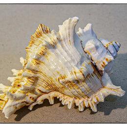 Декорации для аквариумов и террариумов - Ракушка морская, 0