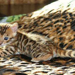 Кошки - Малыш пятнышко 🐈⬛, 0