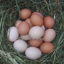 Продукты - Домашние куриные яйца, 0