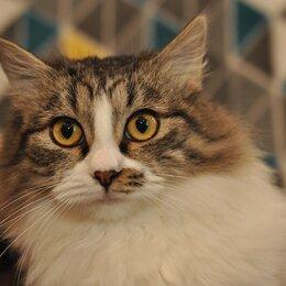 Кошки - Юный котик Артем, 0