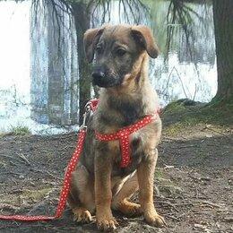 Собаки - Очень нежная, ласковая, цветочек-щенуля ТОЛЬКО …, 0