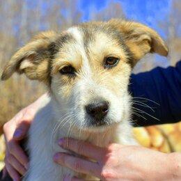 Собаки - Щенок Катя 4 месяца в добрые руки, 0