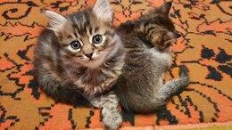 Кошки - Кошки , 0