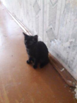 Кошки - Любящим котов.двое разнополые(вроде)котята ещё., 0