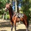 Конные прогулки в Сочи по цене 2500₽ - Экскурсии и туристические услуги, фото 10