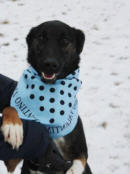 Собаки - Домашняя собака попала в приют, болит лапка,…, 0