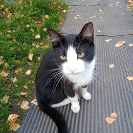 Кошки - Ищу Доброго хозяина, 0