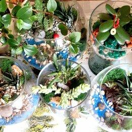 Комнатные растения - Флорариум - неповторимый подарок!, 0