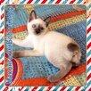 Меконгский бобтейл по цене 12000₽ - Кошки, фото 5