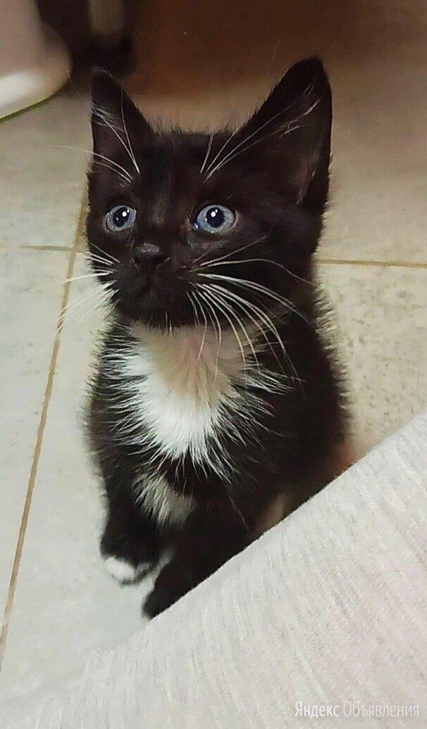 Котёнок котята по цене даром - Кошки, фото 0