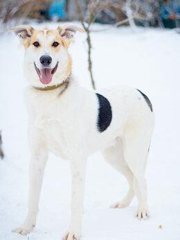 Собаки - Чудесный подросток в поиске семьи , 0