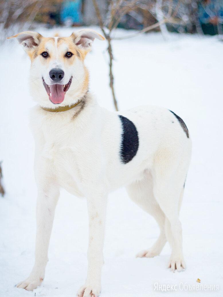 Чудесный подросток в поиске семьи  по цене даром - Собаки, фото 0