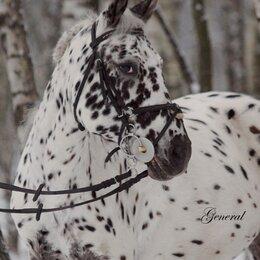 Лошади - Верховая езда от  нуля и до разряда, 0