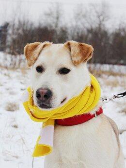 Собаки - Собака из приюта ищет дом, дружелюбный молодой…, 0