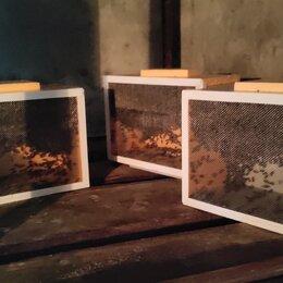 Сельскохозяйственные животные и птицы - Бессотовый пчелопакет с маткой Бакфаст, 0