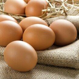 Продукты - Куринные яйца, 0