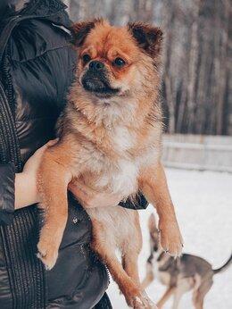Собаки - Пекимопс Кузя ищет дом , 0