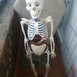 Сборные модели - Скелет, 0