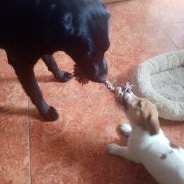 Услуги для животных - Дрессировка Собак Любой Породы. Передержка Собак., 0
