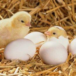 Товары для сельскохозяйственных животных - Инкубатор для выведения цыплят Золушка 70 яиц 220 В автомат поворот, 0