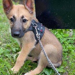 Собаки - Умный щенок (девочка) в добрые руки , 0