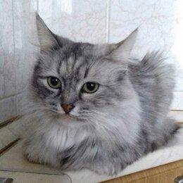 Кошки - Эльза ждет хозяев, 0