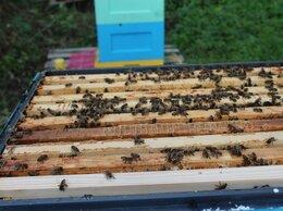 Сельскохозяйственные животные - Заказ пчелопакетов 2022, 0