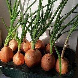 Горшки, подставки для цветов - лоток для выращивания зеленого лука, 0