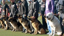 Собаки - Дрессировка собак в Омске - ОЦССС!, 0