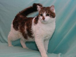 Кошки - Марик-котик компаньон, 0