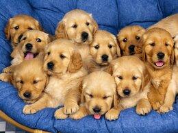 Собаки - щенята оранжевые, 0