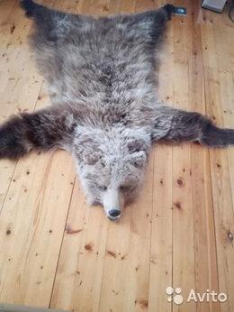 Рога, шкуры, чучела животных - Шкура медведя на подкладе, 0