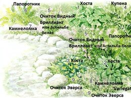 Рассада, саженцы, кустарники, деревья - Клумба N 67,Миксбордер, окаймляющий дорожку, 0