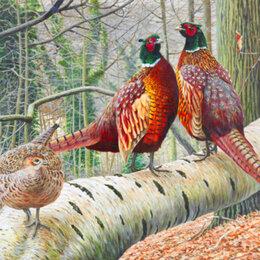 Птицы - Фазан охотничий, 0
