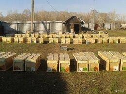 Сельскохозяйственные животные - Пчелопакеты Карника 2022, 0