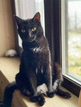 Кошки - Недосмотрели... Не уберегли... И предали..., 0