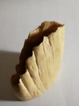 Другое - корень зуба , 0